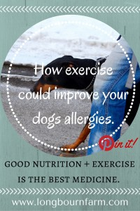 How exercise can help with canine allergies