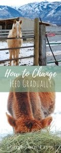 We are going to focus on horses in this article, but the principles apply to any livestock or companion animal. Feed changes for all animals should happen gradually!