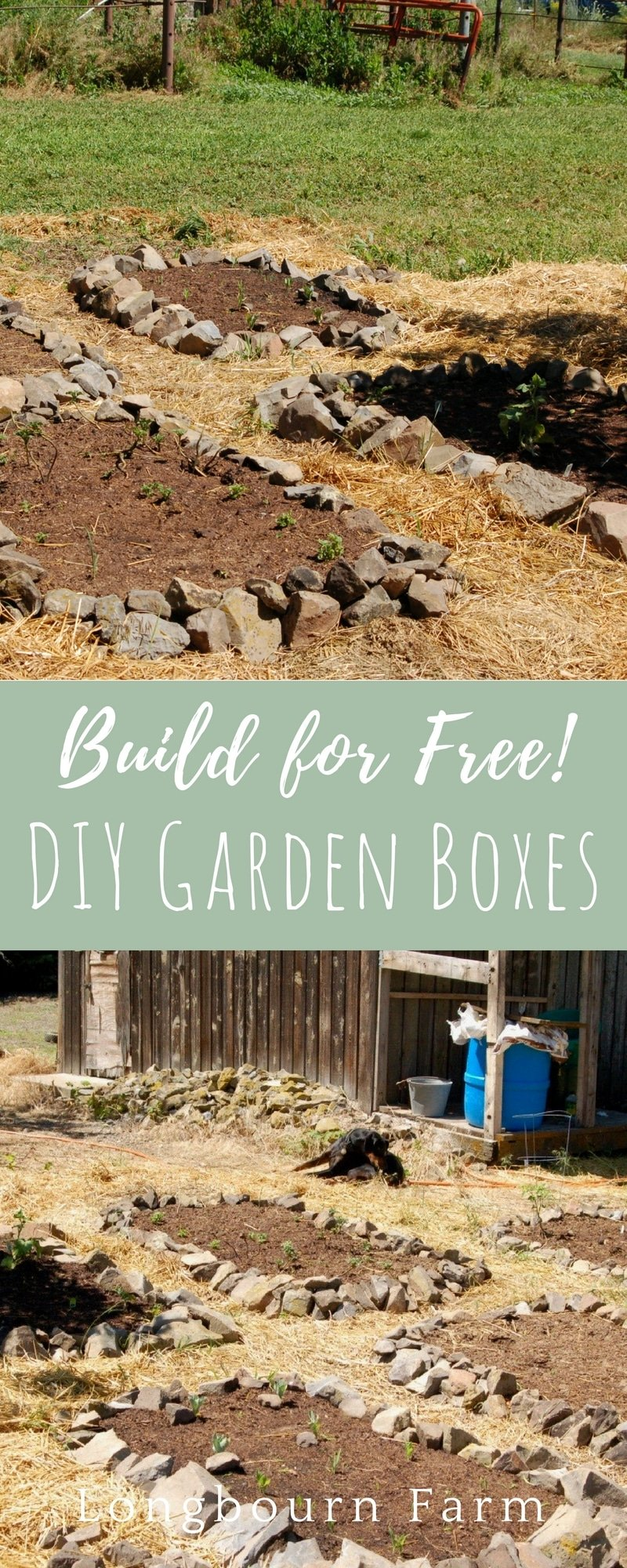 Check out how I made DIY garden boxes for free and didn't have to build a thing. I used the most plentiful material on my property: Rocks!