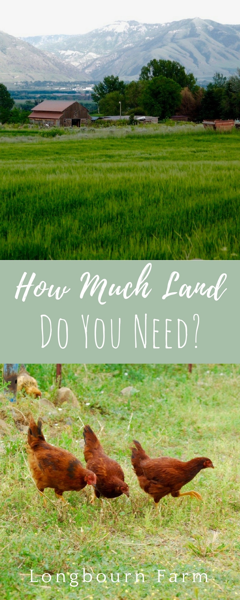 How much land do I need for...A cow?A horse?A goat?A lamb?Chickens?This is a common question people who are interestedin having animals ask.