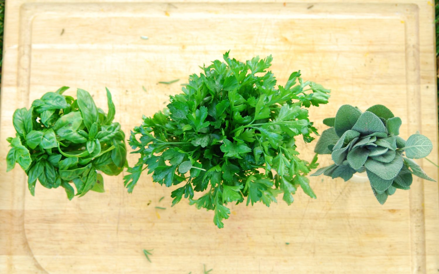 Top view of fresh basil, parsley, and sage in jars of water.