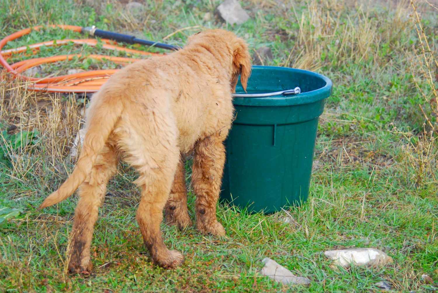 How to Train a Puppy: Potty Training