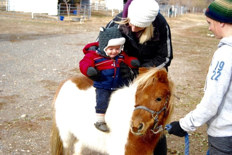 Finding the Perfect Kids Horse