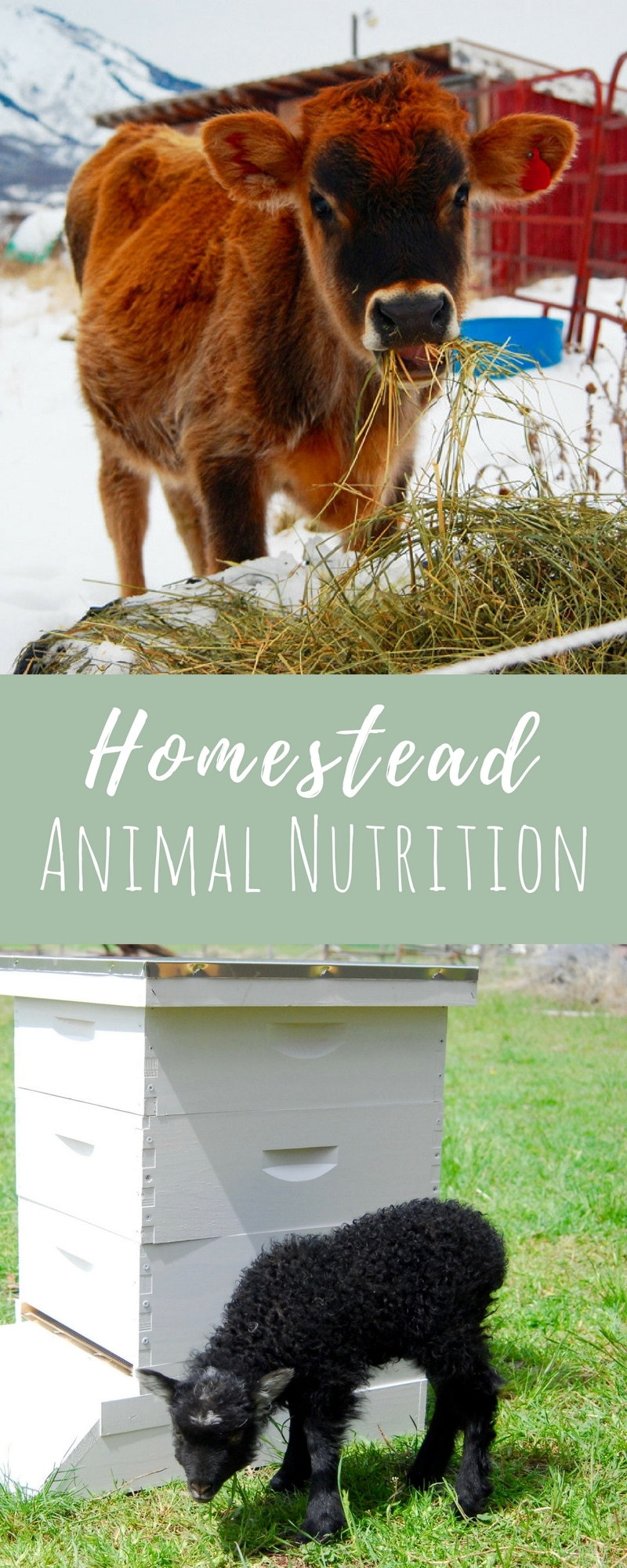 Do you have an animal nutrition management plan on your farm? It should be one of your main focuses. It is simple to implement and proper nutrition is vital for animal health and well-being. Check it out!
