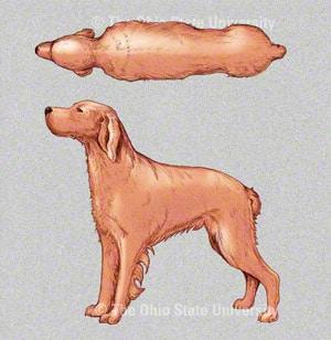 Dog/cat BCS.