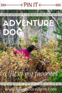 My favorite adventure dog gear