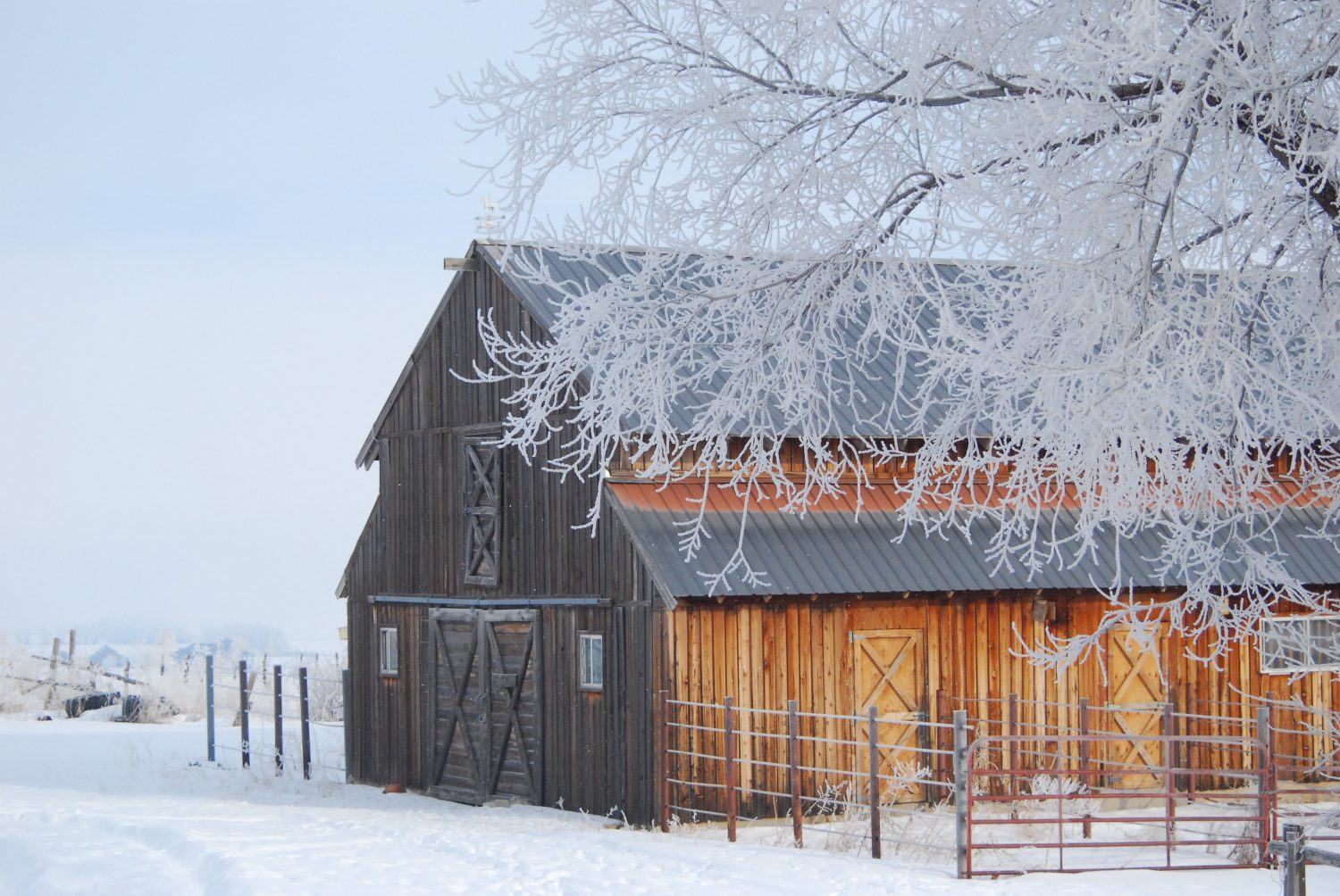 Side angle view of an old wood barn on a frosty morning.