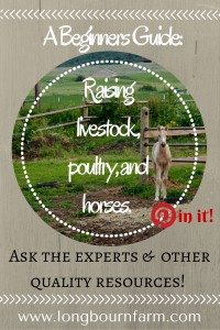 Raising livestock, poultry, and horses for beginners