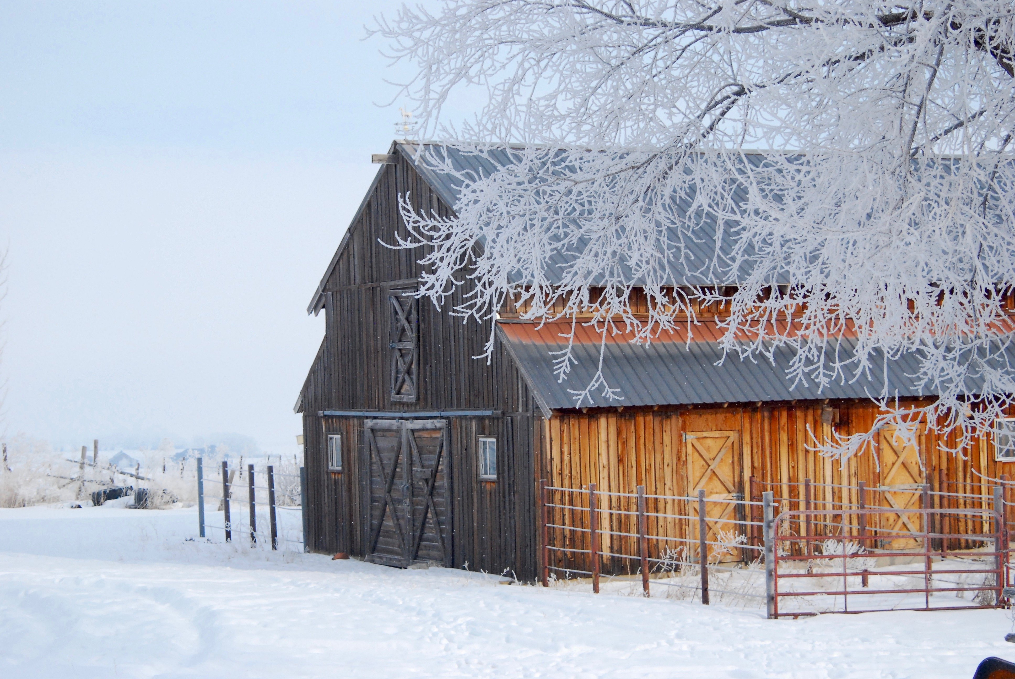 barn in the frost