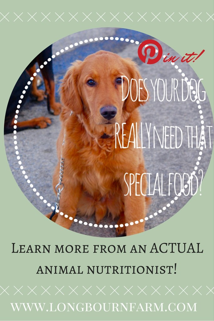 Do you know what you should and shouldn't be feeding your dog? The answers may surprise you.