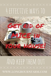 4 of the most effective ways to eliminate mice in your home and keep them out!