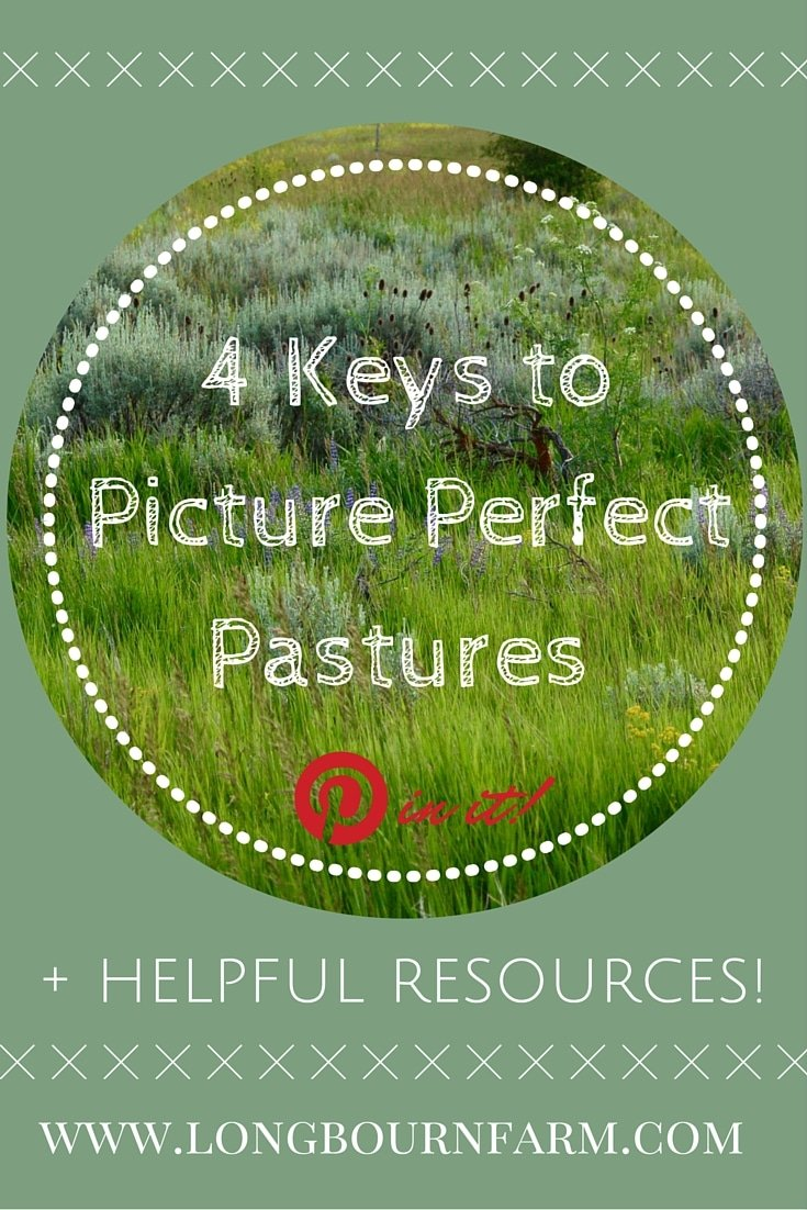 4 keys to get picture perfect pastures on your small acreage! Get all the information you need to get started on the right foot with your own property.