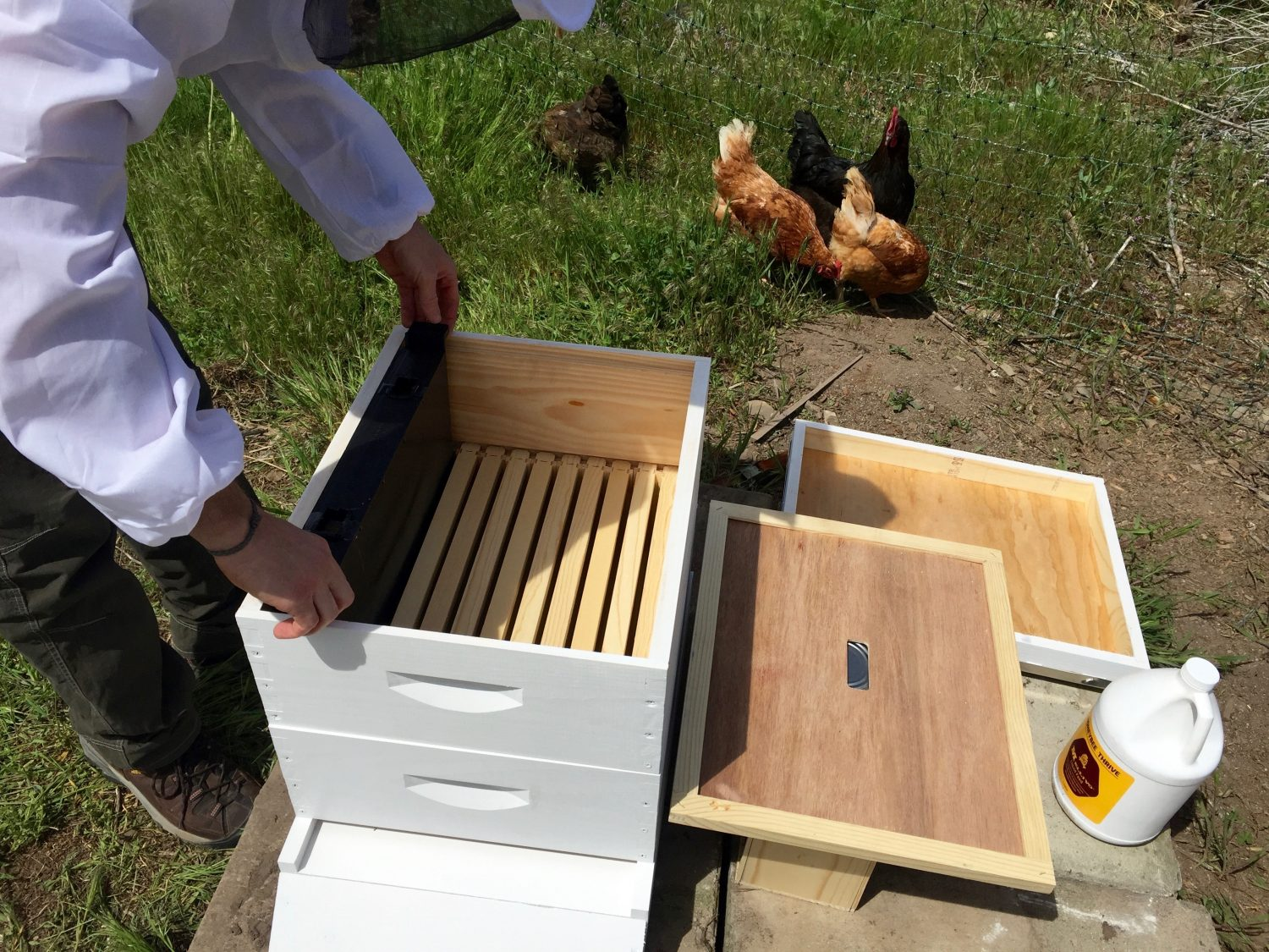 Getting Bees Part 1 – Beehive Assembly