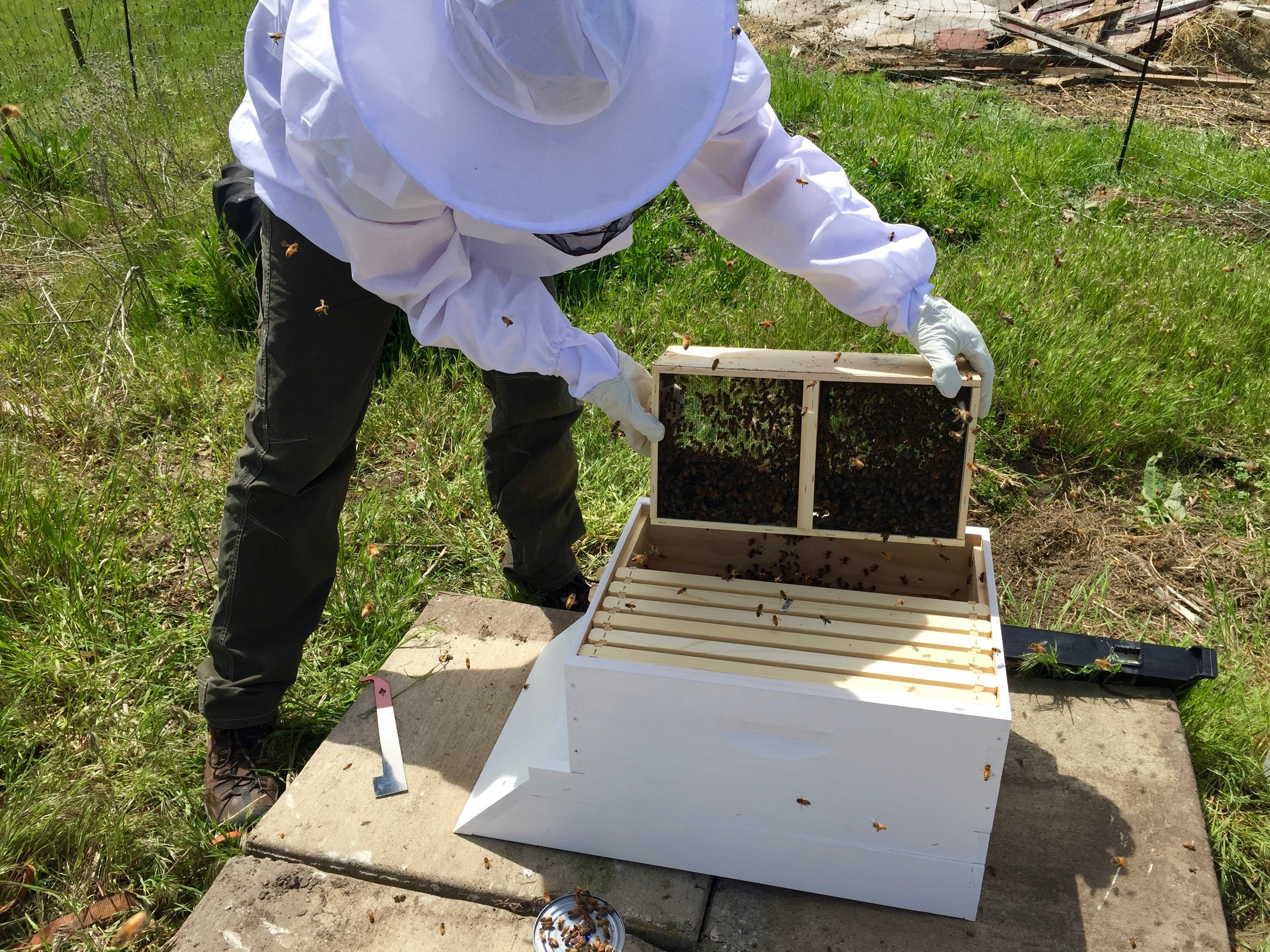 Dumping bees into hive
