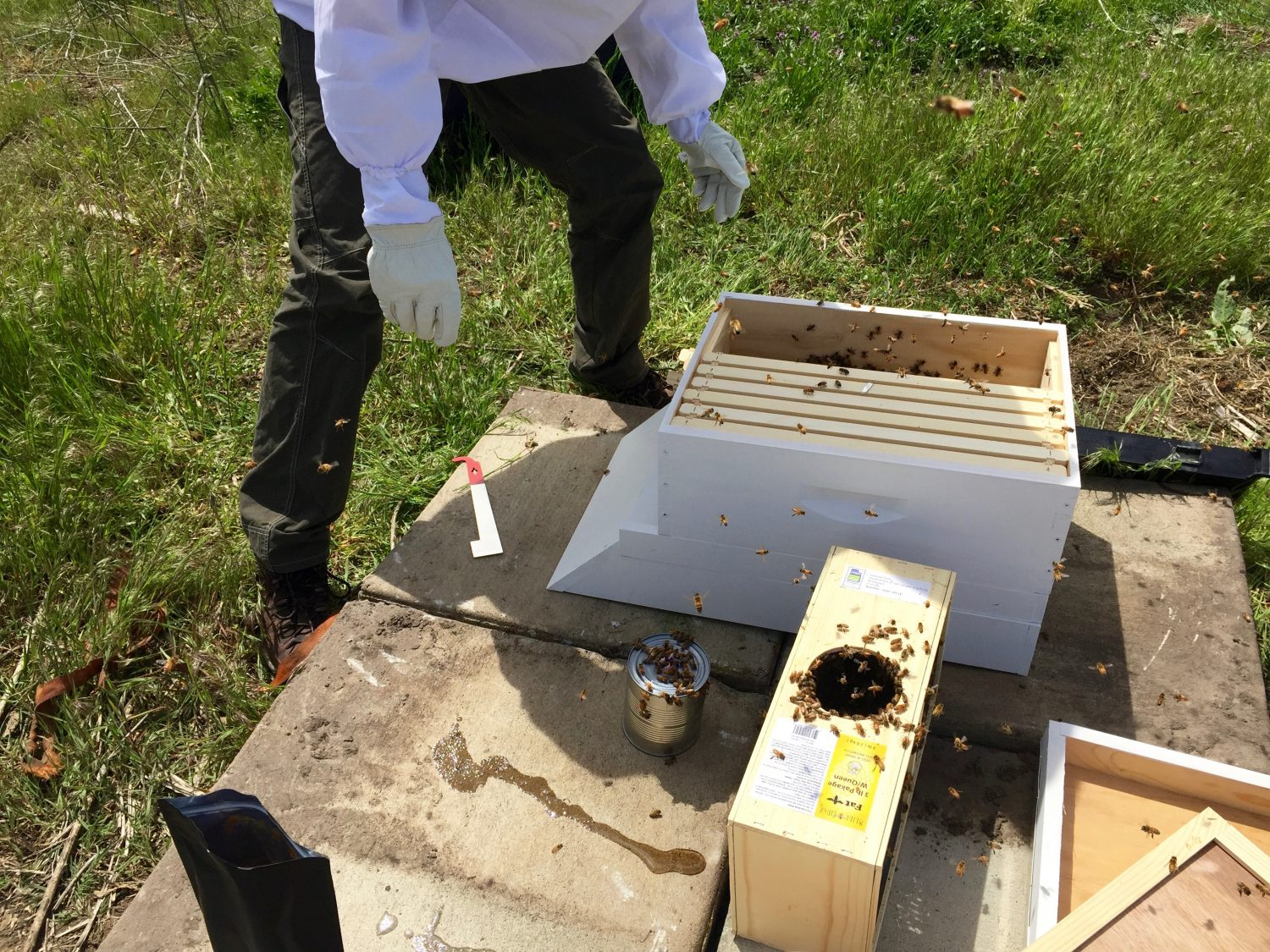 Getting the bees into the hive