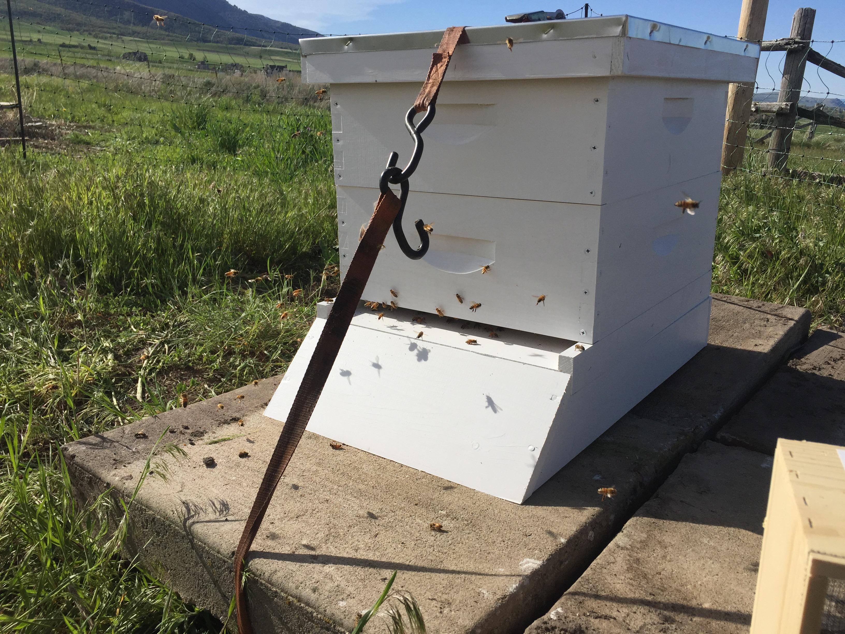 Set-up Hive