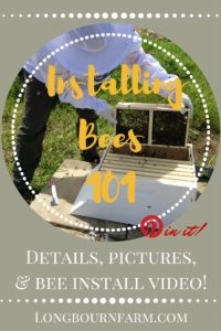 Installing bees in your beehive. Detailed pictures, video and descriptions!