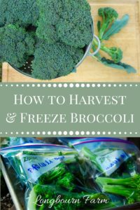 Learn the easiest way to harvest broccoli & freeze broccoli. It's such an easy way to preserve what you grow so you can enjoy it longer!