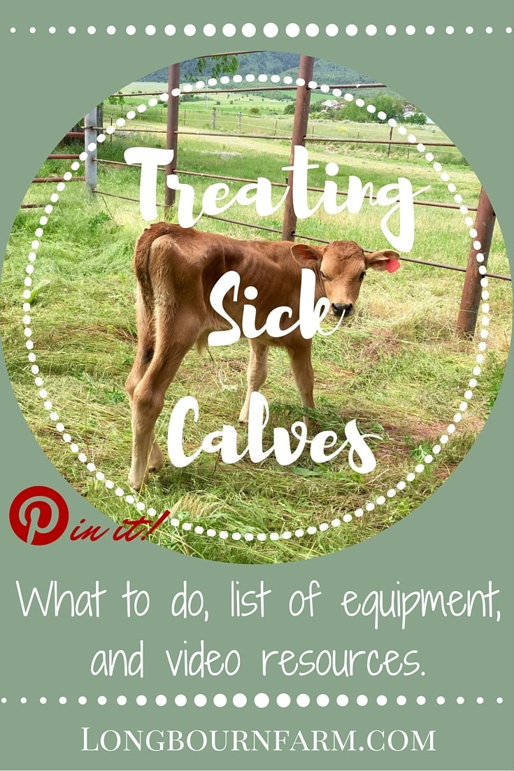 Our experience of treating sick calves with scours. Learn what supplies to have on hand, what to do, and what NOT to do to help your calves recover.