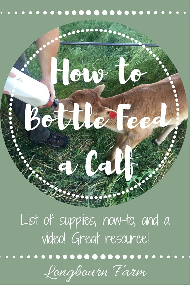 Everything you need to know about how to bottle feed a calf List of supplies, a helpful video, and how to do it so you can feel confident raising a calf!