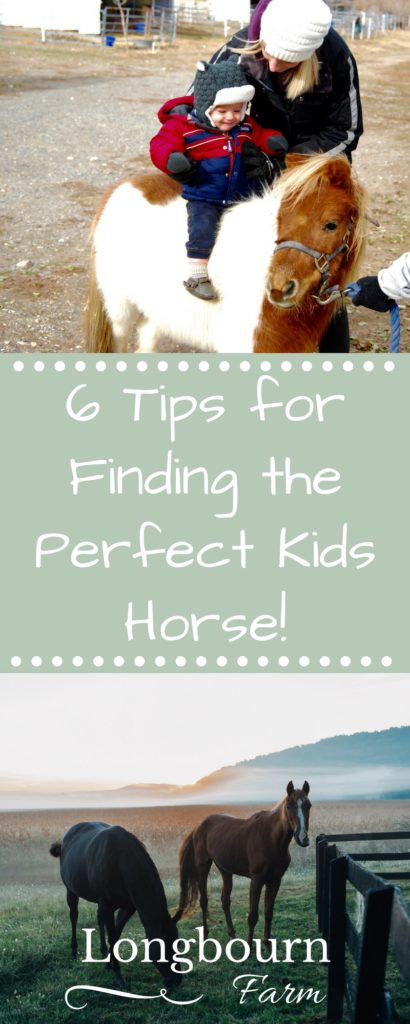 Finding the perfect kids horse can be a challenge, but here are 6 tips to help you on your search for the right mount for your family!