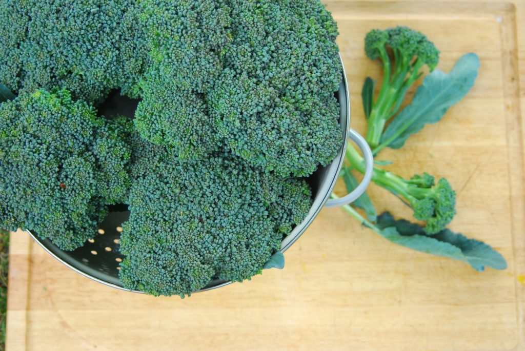 Top down view of garden fresh broccoli in a colander.