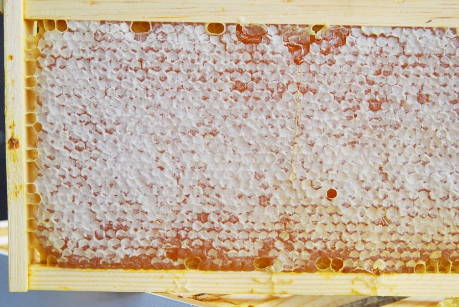 Honey Harvesting Equipment and How-to!