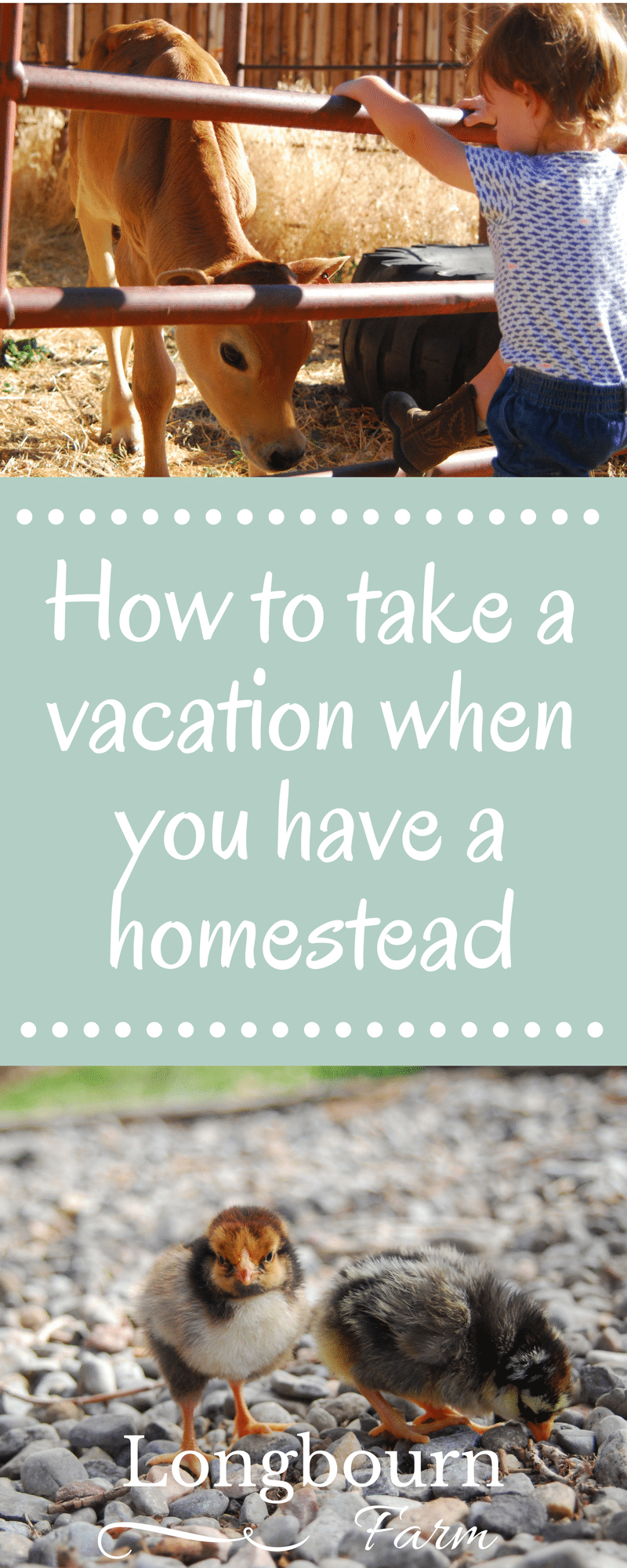 How to take a vacation when you have a homestead or small farm: Keep farm jobs low maintenance, plan trips at the right time, & hire help. Get the details! via @longbournfarm