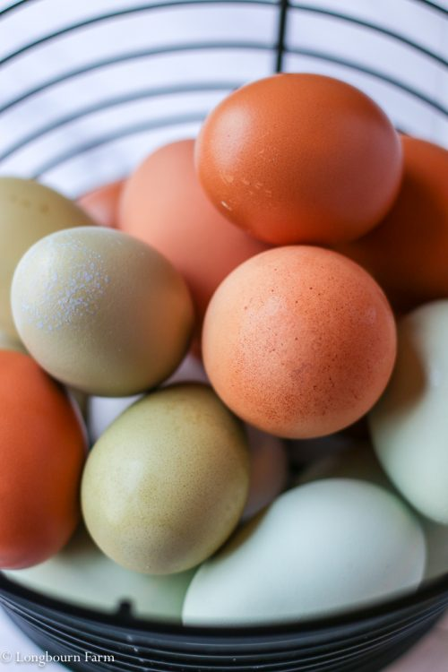 Picture of colorful fresh chicken eggs in a black wire basket.