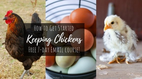 "Three images (grown chicken, basket full of colorful eggs, and a bantam chick) overlaid with the title ""how to get started keeping chickens, free 7-day email course!"""
