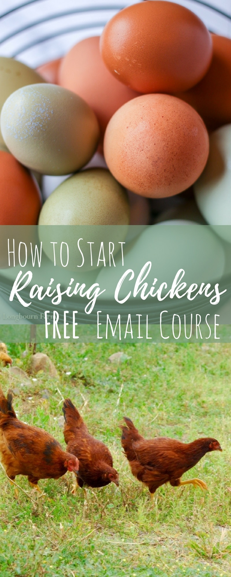 This 7-day email course is perfect for the beginning chicken keeper. I'll give you the most useful tips and tricks to get you started out right!