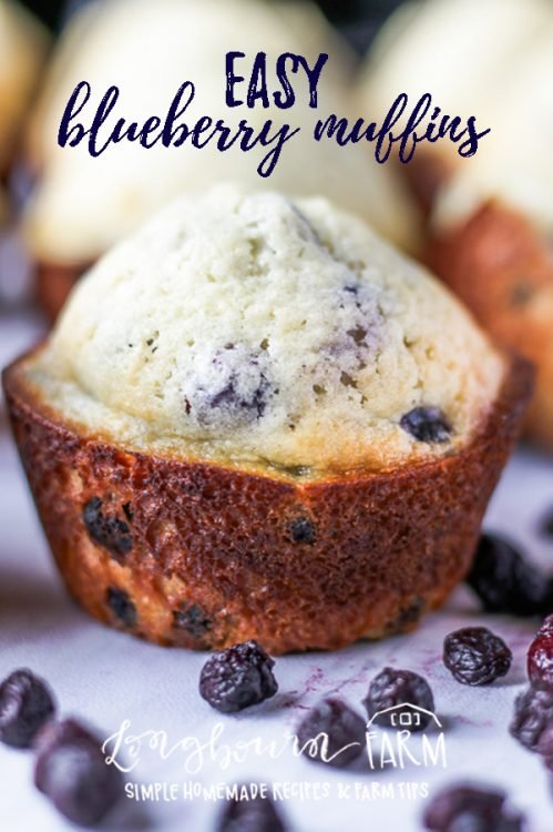 Making blueberry muffins doesn't have to be hard. Make these easy blueberry muffins today! Frozen or fresh blueberries and simple ingredients make it a delicious and quick breakfast. #blueberry #blue #berry #muffin #blueberrymuffin #homemademuffins #homemadeblueberrymuffin #homemade #fromscratch #bakingfromscratch #homemadebaking #baking #bakingday