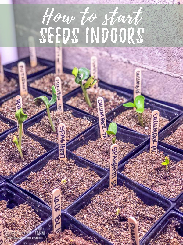 Learning how to start seeds indoors isn't hard, follow these simple steps to ensure your seeds get a good start so they can become strong plants. Starting seeds indoors is a great way to save money in your garden and get the varieties you want! #garden #gardening #seeds #seedlings #sprouts #sproutingseeds #growingseeds #howtostartseeds #startseeds #howtogarden #gardeninginfo #progardener #gardeningtips #gardentipsandtricks
