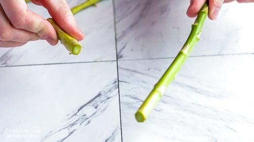How to trim asparagus spears by breaking them, freshly broken asparagus spear.