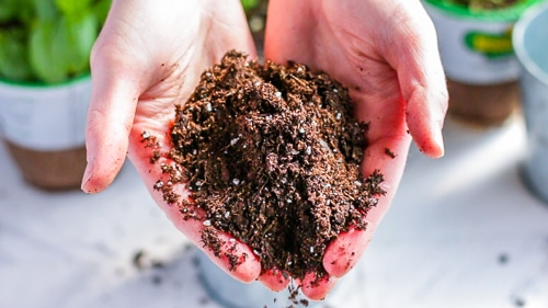 Holding top quality soil.