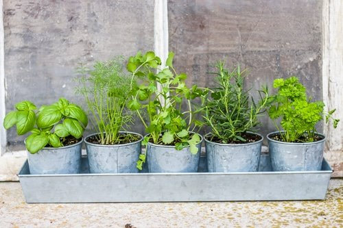 Tips For Growing Herbs Indoors Longbourn Farm