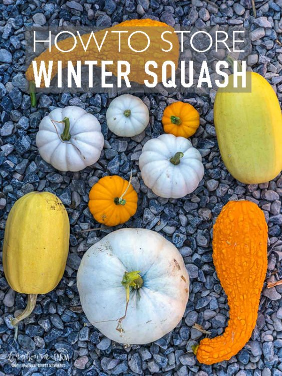 Learning how to store your beautiful harvest is as important as growing it! Learn all about Winter Squash Storage, and how you can keep them for months. #longbournfarm #farmtips #farming #hobbyfarm #smallfarm #hobbyfarmlife #countrylife #smallfarming #gardening #gardener #garden #dreamgarden #farmhouse #farmhouselife #squash #wintersquash #butternutsquash #acornsquash #spaghettisquash