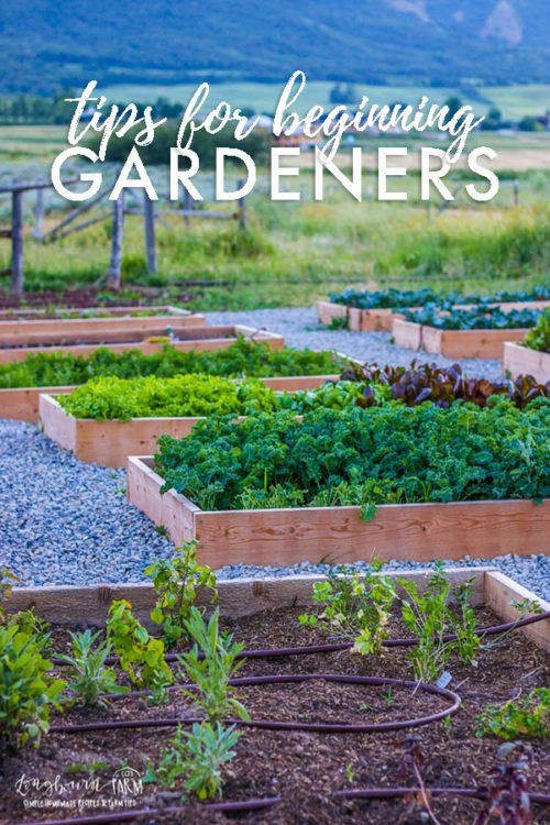 Want to get into gardening but not sure where to start? Learn all the gardening tips for beginners you need to be successful! #gardeningtips #veggiegardeningtips #vegetablegardeningtips #gardeningtipsforbeginners #gardeninghacks #gardeningtipsandtricks #howtogrowvegetables #seedstarting #gardeningsoil