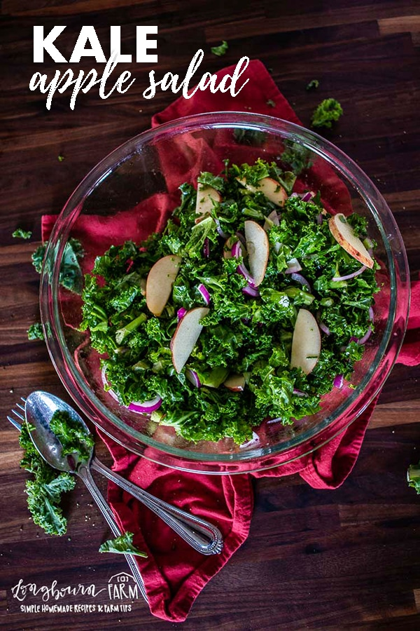 Kale apple salad is easy to toss together and the orange vinaigrette sends it over the top! Perfect for any time of year and family-friendly. #kaleapplesalad #kaleapplesaladeasy #kaleapplesaladdressing #kaleapplesaladhealthy #kaleapplesaladrecipe #kaleapplesaladesimple via @longbournfarm