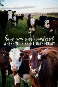 #sponsored Ever wonder exactly where your beef comes from? Or what really goes on in cattle ranching? Or what cows eat? This post will answer all those questions and more! #KnowYourBeef #BeefFarmersandRanchers @beeffordinner #beefcattle #beefranch #beeffarm #cattlefarm #cattleranch #cattleworking #beef #beefcow #raisingcattle #angus #angusbeef #anguscattle #highlandcattle #highlandcows #beefcuts #buyingbeef #howtobuybeef #freezerbeef