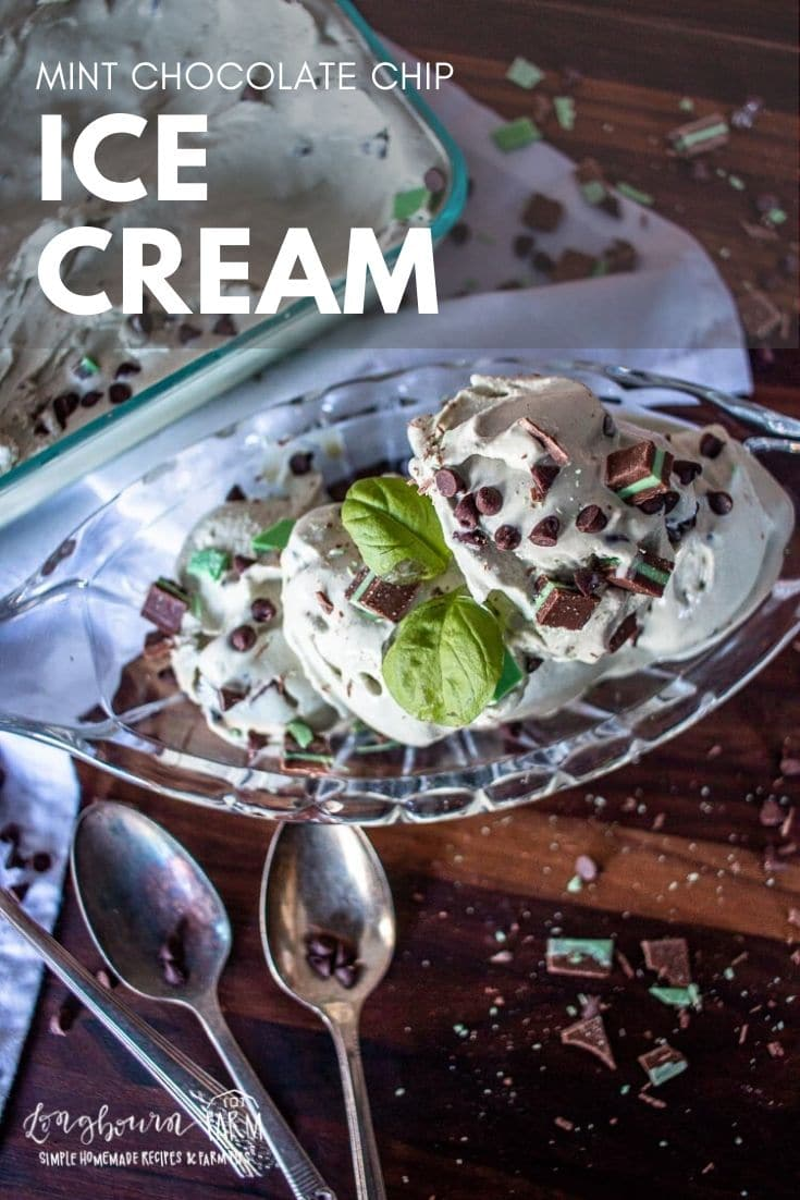 Mint chocolate chip ice cream is a cool and tasty treat for any time of year! It's easy to make yourself and everyone will love it.