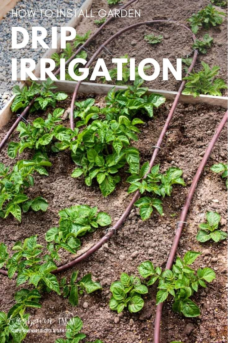 Setting up a drip irrigation system in your garden seems daunting but it is totally doable! Step-by-step instructions and how-to video to guide you through.