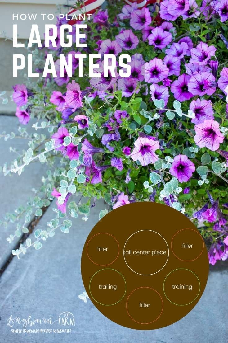 Planting large planters can feel intimidating. You want them to be big and beautiful and make an impact. Picking the right flowers is actually really easy!