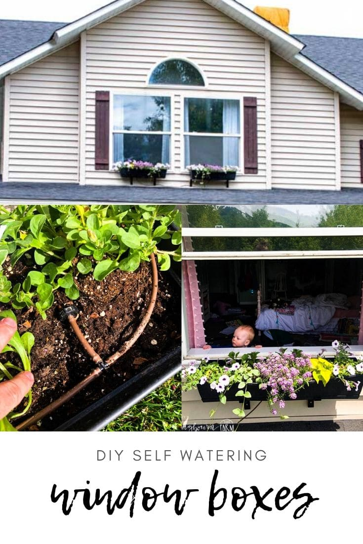 Window boxes are so lovely and a great way to add curb appeal to your home! But how do you water them? With a DIY Self-watering window box drip system!