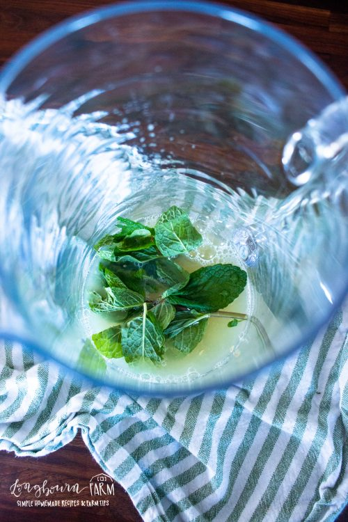 mint leaves in a pitcher with liquid